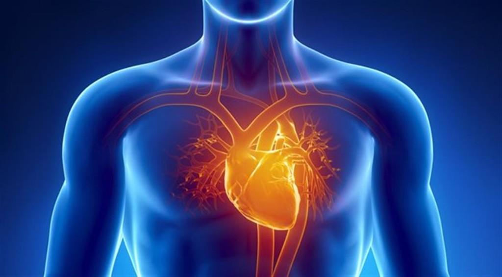 Картинки по запросу сердце рентген клипарт